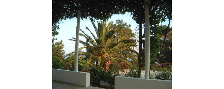Palm tree in the garden